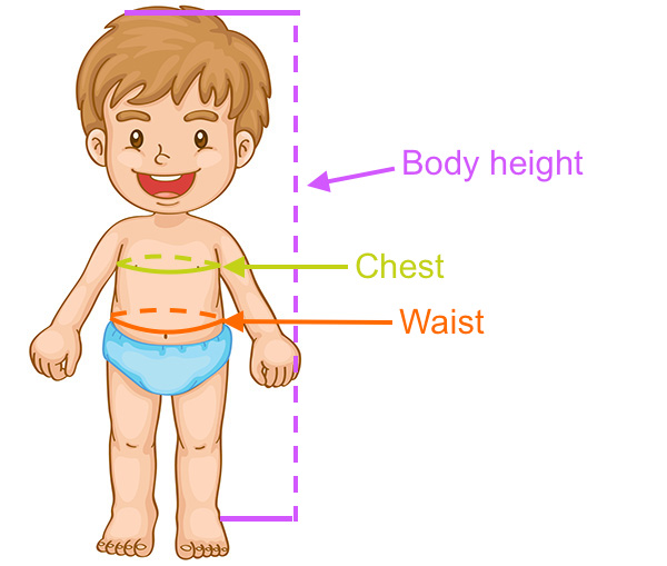Determine child's size from height, chest and waist measurements